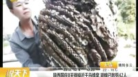 陕西国庆8天摘掉近千马蜂窝 胡蜂已致死42人 说天下 20131009 标清