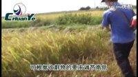 川野割草机割灌机视频
