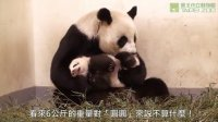 圓圓的大玩偶 Giant Panda Yuan-Yuan and Her Stuffed Doll