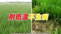视频: 绵阳亿金QQ308009808