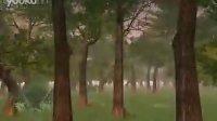 【3dgs】森林场景演示