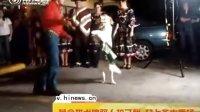 【热点搜索】黄金猎犬爱跳双人拉丁舞 登上各大秀场扬名国际