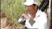 游钓中国系列片之四盛夏力博草鱼群23--武汉天元