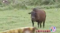广东打击假币宣传视频(上)