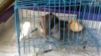 小松鼠 金花松鼠成长录之----小松鼠吃瓜子
