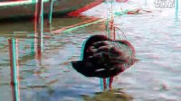 红蓝立体-黑天鹅舞曲