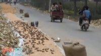 【拍客】麻雀偷吃玉米雷人场面