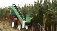 巨明二行背负式玉米联合收获机收获场面.