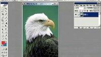 [PS]Photoshop视频教程 ps从头学起第19集