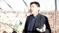 视频: 现实版QQ农场-章丘鲁汇佳瓜菜精品园