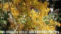 视频: QQ 335609326★2010.12.3★韶关南雄坪田镇东赏银杏树音乐字幕版★