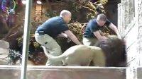 拉斯维加斯美高美酒店狮子袭击人