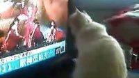 视频: 超爱看打渔晒网韩佳的猫