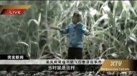 虫虫总动员鸭梨了,最牛中国版翻拍出世