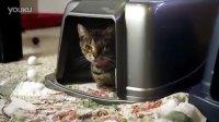 萌翻了的小猫求收养 同步配音版