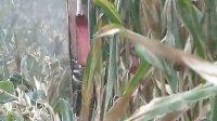背负式玉米收获机http://www.cnhnb.com/sell/yumishouhuoji