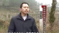 红心猕猴桃http://www.cnhnb.com/sell/mihoutao