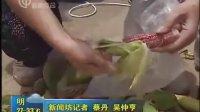 新闻坊玉米节开幕