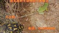 视频: 皖东南野生动物驯化养殖区【宣城】QQ1365442852