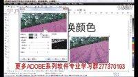 CorelDraw 替换颜色  cdr教程调整图片教程  位图调整