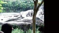 台北動物園-大象館