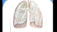 呼吸器官——博野县兴华小学六年级科学专用