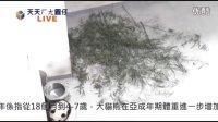 2013.11.10 天天ㄏㄤ圓仔 網路直播加速版(Baby Giant Panda Yuan