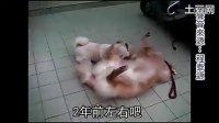 狗遛狗「實在神」路人大笑 快播影院www.58192.com