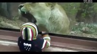 Lioness tries to eat baby at the zoo