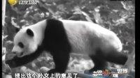 [小伍影视]【老梁观世界20120103】熊猫走出黑白时代