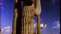 沙漠远景:仙人掌