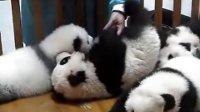 [火星豆沙包]可爱的熊猫宝贝和饲养员拉小手