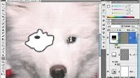 PS视频教程 表情动画