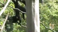 10.1好去处:香江野生动物世界开放巴西雨林 广东卫视总代