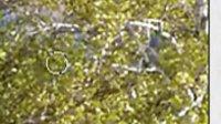2011年3月3日晚上7点30分清扬老师ps基础第19课【模糊.锐化.涂抹.减淡.加深.海绵工具】