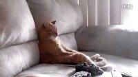 实拍 家猫坐沙发看电视霸气外露的姿势