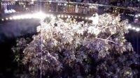 视频: 超震撼1《澳门永利赌场黄金发财树四季变换》