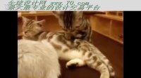 超惊奇看看这只sanpei猫的按摩手法(70.com)