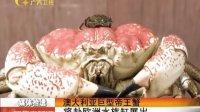 澳大利亚巨型帝王蟹 将赴欧洲水族馆展出 120502 新闻夜总汇