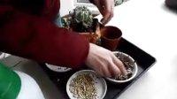 花婆婆多肉植物如何换盆视频