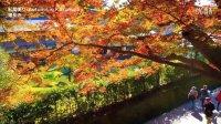 鎌倉の美しい紅葉の名所 Autumn in Kamakura 紅葉便り