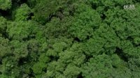 Lian Pin Koh A drone~s-eye view of conservation