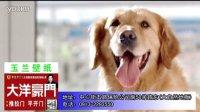 视频: 澄城大洋豪门代理广告