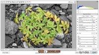 [PS]超清 photoshop CS6教程—创建选择性色彩效果与调整画笔 Q群:203601690