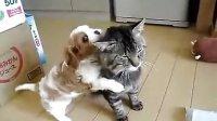 视频: 猫猫狗狗一家人http:www.199soft.com
