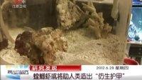 """研究发现:螳螂虾或将助人类造出""""仿生护甲"""" 晨光新视界 120628"""