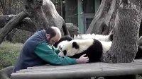 Voglio svegliare i panda allo zoo di Madrid