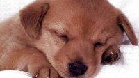 【皮皮虾】【低级趣味】欧美性爱照片首页 - 搜狗搜索