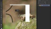 初识选择区-Photoshop cs6从头学新教程