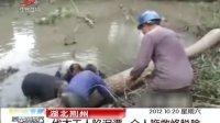湖北荆州:伐木工人陷泥潭 众人施救终脱险 晨光新视界 121020